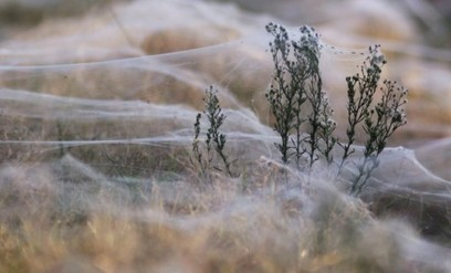 The #science behind #Australia's spooky 'spider rain' - Washington Post | Limitless learning Universe | Scoop.it