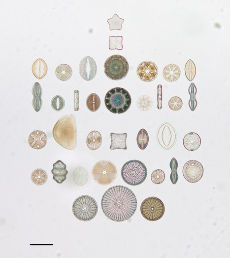 Artistic Arrangements of Microscopic Algae Viewed Through a Microscope | Colossal | Art-STEM Connections | Scoop.it