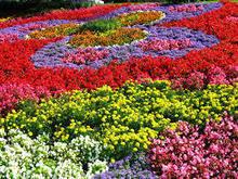 Flower Bulbs: 5 Different Types OF Summer-Flowering Bulbs!! | Cracksss Home Design Blog | Flower Bulbs | Scoop.it