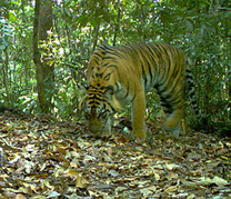 Camera Traps Emerge as Key Tool in Wildlife Research by Jeremy Hance: Yale Environment 360 | Animal Photography | Scoop.it