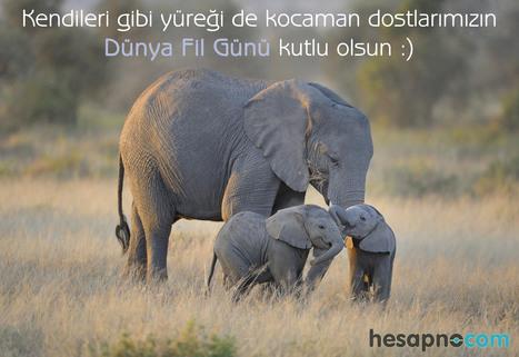 Dünya Fil Günü | Banka hesapları www.hesapno.com. | Scoop.it