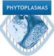 Q-bank Phytoplasmas database | Plant health | Scoop.it