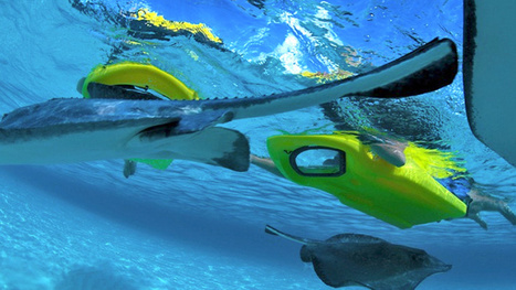 Is it a snorkel kit or a kick board? - A Kick Board With a View Lets You Snorkel Without Submerging   Risk Management AS 2.7   Scoop.it