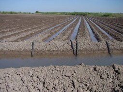 Institute-led initiative receives $2.3 million grant to address water quantity ... - AgriLife Today | Texas Water Resources Institute | Scoop.it
