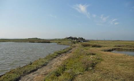 Les (petites) merveilles d'Aqui! - Retour sur l'Île aux Oiseaux - Aqui! | Lège Cap Ferret | Scoop.it