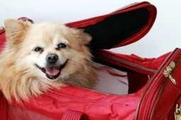 Travel Tip Thursday – Traveling With a Pet: What You Need to Know | Blissfully Frugal | Scoop.it