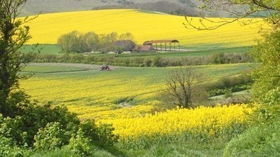 Why is there more oilseed rape being grown? | All Things Geography | Scoop.it