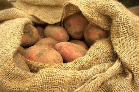 Le sac de patates | Ce que nous partageons | Scoop.it