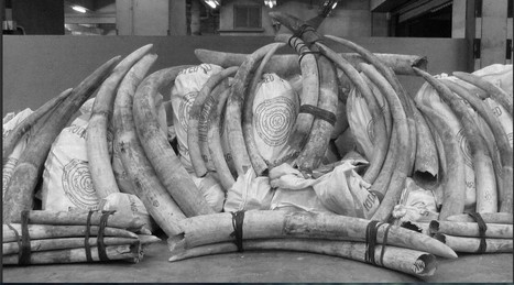 Ivory Uncovered: Following The Trail Of Tusks. | Biodiversity | Scoop.it