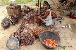 GRAIN — Vidéo : Les femmes ouest africaines défendent l'huile de palme traditionnelle | Afrique: développement durable et environnement | Scoop.it