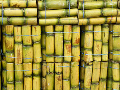 How Carnegie uses sugarcane to make greener textiles | Materials Science Stories | Scoop.it