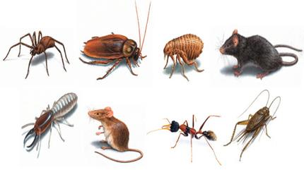 شركة مكافحة حشرات بالرياض 0503106686 | تنظيف فلل | Scoop.it