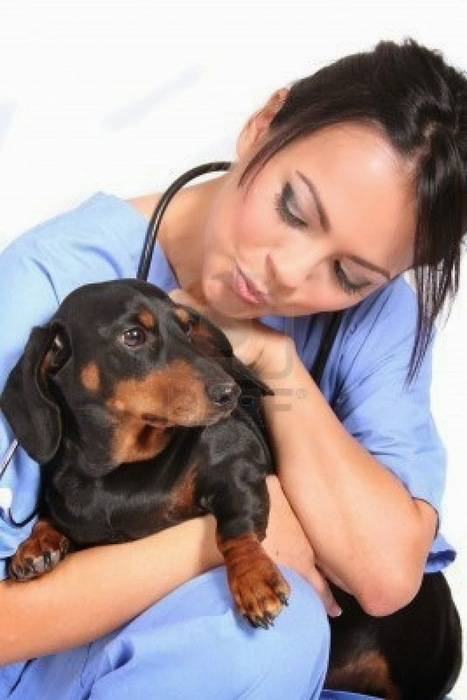 Dog Health Care: The Different Approach to Care Dogs' Health   Dog Health Care   Scoop.it
