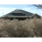 Fungi War Looms against Tumbleweeds that Plague California - AllGov | Plant Pathology | Scoop.it
