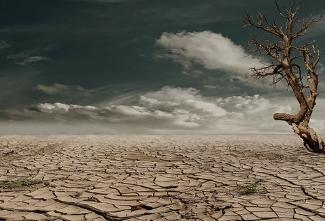Drought: California agriculture can learn from Africa   Recycling News Channel   OrganicStream.org   Scoop.it
