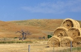 Drought Resources - eXtension | Drought in Nebraska | Scoop.it