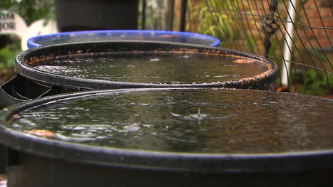 Rain Harvesters Overflowing - Use it to irrigate your foundation! | Dallas Things To Do | Scoop.it