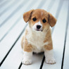 Web Dogs Guide