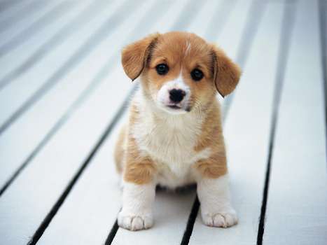Big List of Female Dog Names - News - Bubblews | Web Dogs Guide | Scoop.it