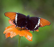 Tanzania: Fighting Poverty With Butterflies | Global-Issues | Scoop.it