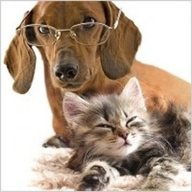 Tips to Help Reduce Shedding in Pets | Local Vet Search | Scoop.it