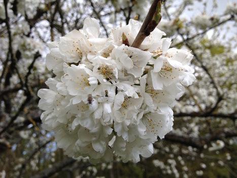 Les insectes pollinisateurs sont indispensables | Les colocs du jardin | Scoop.it