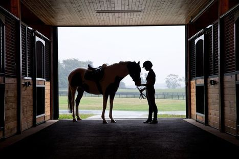 What horses can teach us about leadership - Fortune | Dressage | Scoop.it