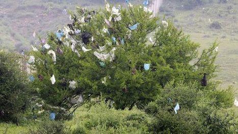 La Californie va interdire les sacs plastiques | The Blog's Revue by OlivierSC | Scoop.it