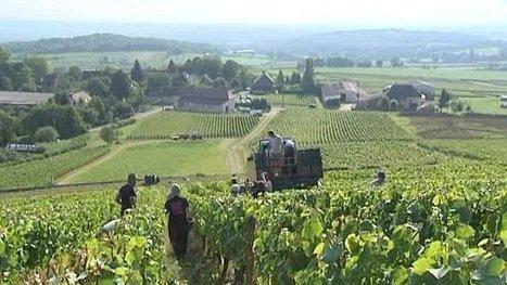 3 500 hectares de nouvelles plantations de vigne sont autorisées | Le Vin et + encore | Scoop.it