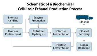 Production of Cellulosic Ethanol - BioEnergy Consult | Algae | Scoop.it
