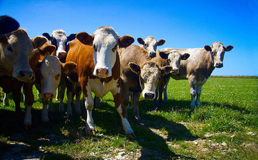 10 Reasons Why the Meat and Dairy Industry is Unsustainable - Care2.com | Insect protein is future food source for Animal and Human beings?! | Scoop.it