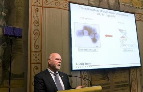 Genome scientist Craig Venter in deal to make humanized pig organs | Amazing Science | Scoop.it
