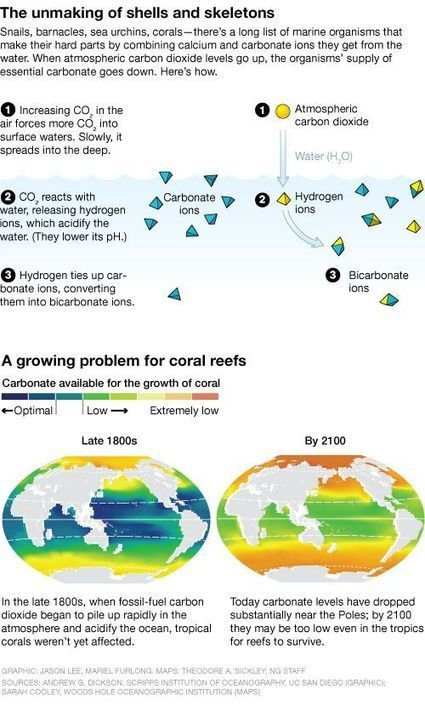 Ocean Acidification Chipping Away at Snail Shells   News RoundUP for Marine Science   Scoop.it