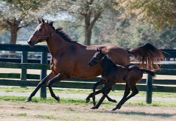 Sport Horse Reproduction: Challenges and Solutions | Equine Reproduction | Scoop.it