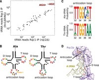 Rqc2p and 60S ribosomal subunits mediate mRNA-independent elongation of nascent chains   Awesome Science That  I Like   Scoop.it