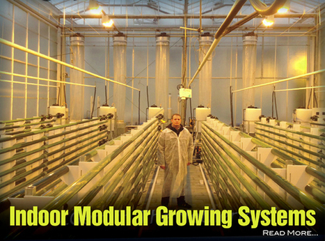 Scalable Algae Microfarms: Part 5 | Sustain Our Earth | Scoop.it
