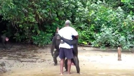 Chimps Abused By Humans Still Have Remarkable Ability To Love | Nature Animals humankind | Scoop.it