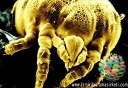 Akar İlaçlama - İzmir İlaçlama   Böcek İlaçlama Şirketi   Scoop.it