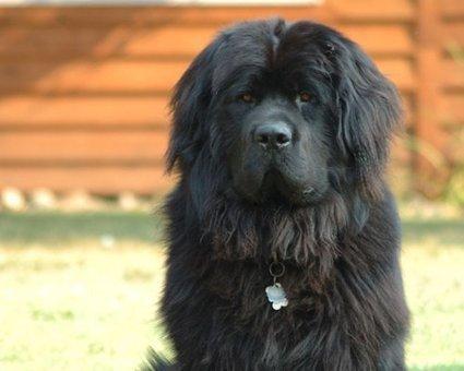 10 life-saving animals: A dog named Tang | Animals Make Life Better | Scoop.it
