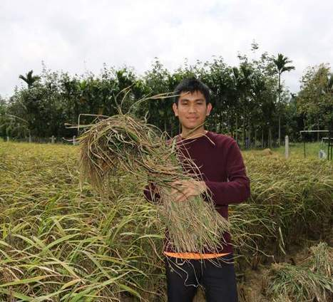 MALAYSIA: Technology and agriculture: The perspective of a young rice scientist | Selected News from SRI-Rice: April 2016 **sririce.org | Scoop.it