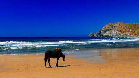 """Horse on the beach"" by Natacha Ruty on 500px   Baja California   Scoop.it"