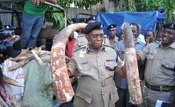 allAfrica.com: Tanzania: Police Impound Tusks Worth Sh2.1 Billion | The Wild Planet | Scoop.it