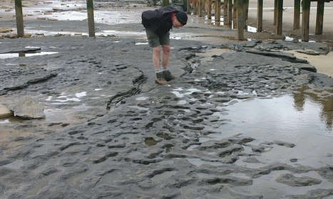 850,000-year-old human footprints found in Norfolk | ancient civilization | Scoop.it