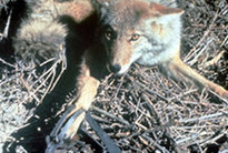 Los Angeles Bans Animal Traps that Grip or Snare | One World Enviromentalism | Scoop.it