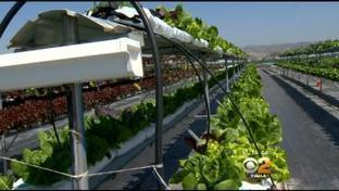 Hydroponic Farms May Be Solution To Drought's Impact On Calif. Farmers | Greenly | Scoop.it