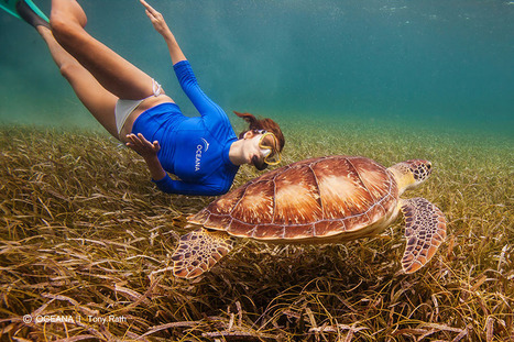 Actress and Ocean Activist Kate Walsh, Visits Belize to Raise  Awareness on Belize's Sea Heritage | Filmbelize | Scoop.it