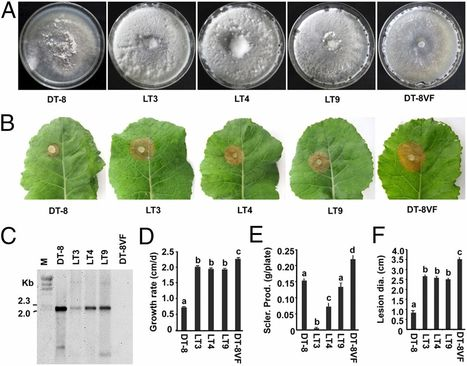 Fungal DNA virus infects a mycophagous insect and utilizes it as a transmission vector | Plant pathogenic fungi | Scoop.it