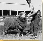 Sheep Fueled 1920s Economy | 1920's and the Great Gatsby | Scoop.it