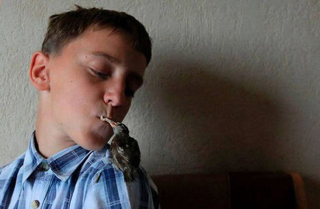 Amazing Photo Of Friendship Between A Boy And A Wild Bird   Abgefahrene Tiere   Scoop.it