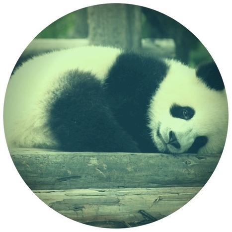 Google Panda cresce ancora: ecco le novità della versione 4.0 | Web marketing | Scoop.it